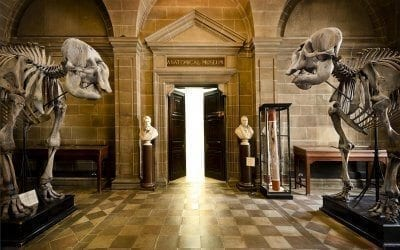 Edinburgh is home to an impressive collection of historical and anatomical specimens.